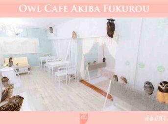 猫头鹰咖啡馆 东京