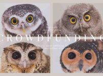 owlcafetokyo