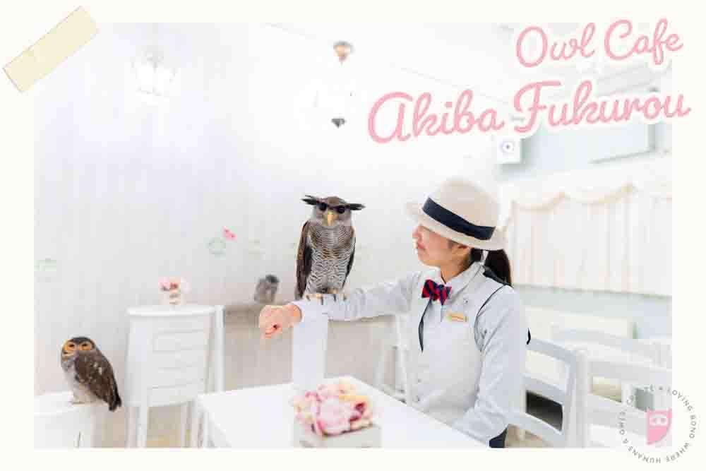 猫头鹰咖啡馆 东京 日本