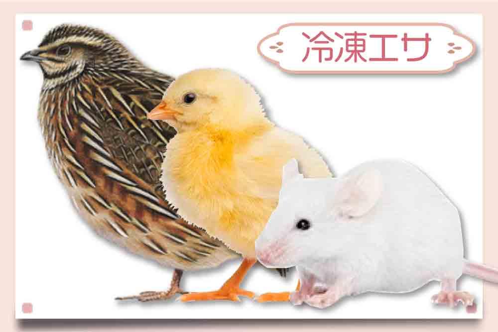 フクロウの餌(ひよこ・ウズラ・マウス)