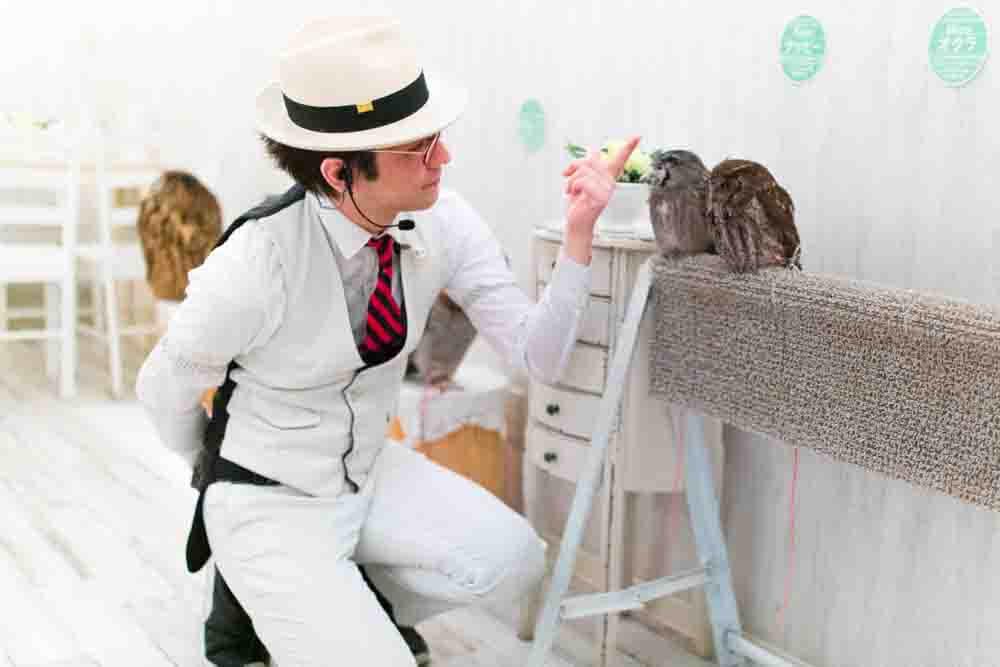 owlconcierge2