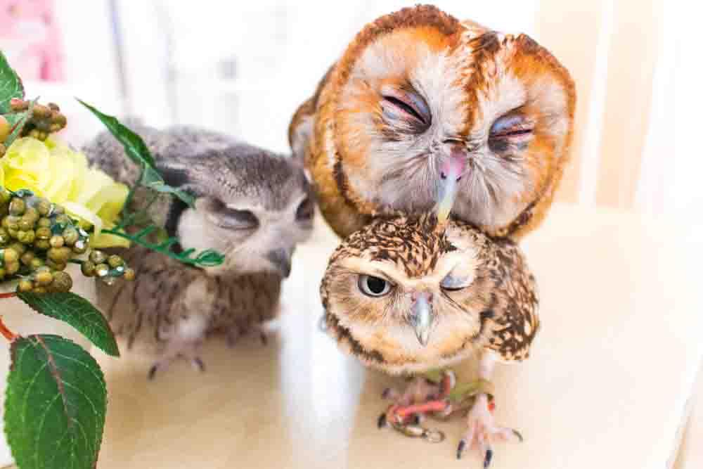 owlcafe staff