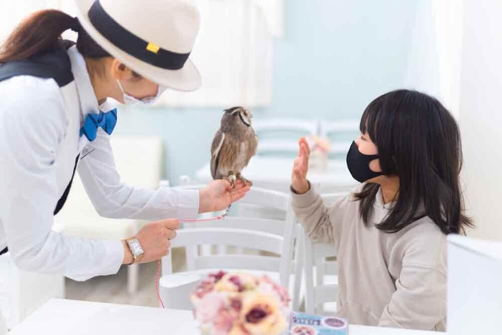 フクロウと子供