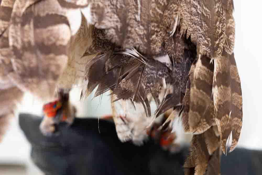 フクロウの尾羽