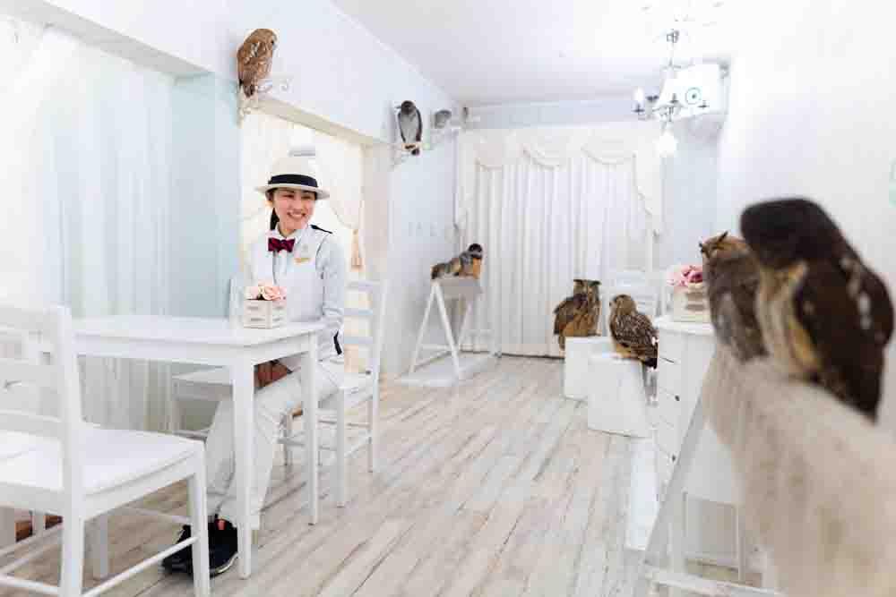 フクロウカフェ東京の店内