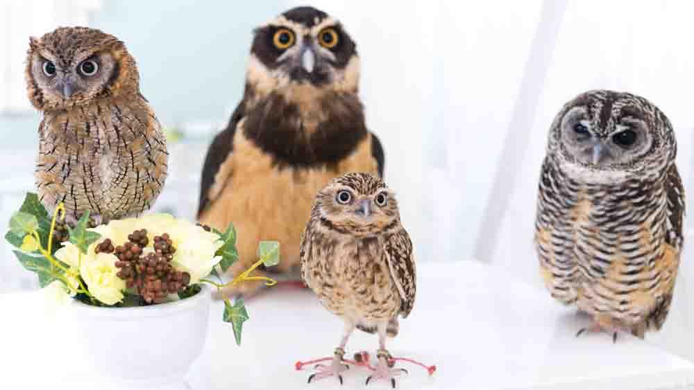フクロウが4羽いる写真