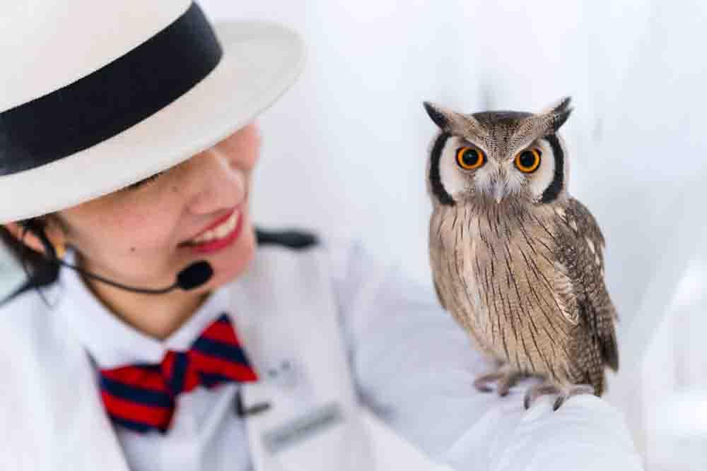 owlconcierge