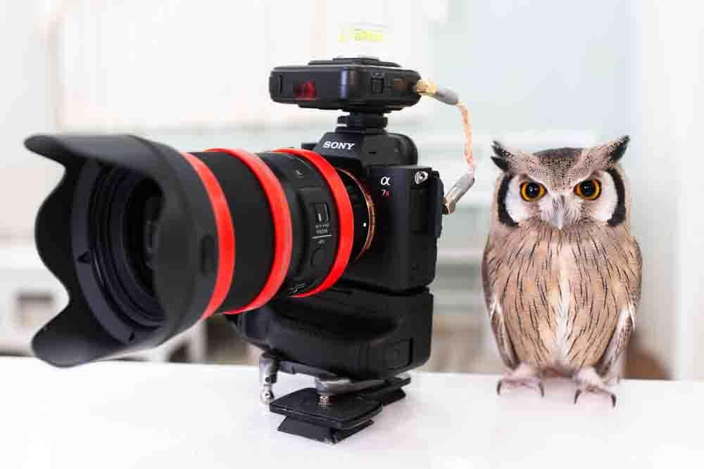 フクロウとカメラ