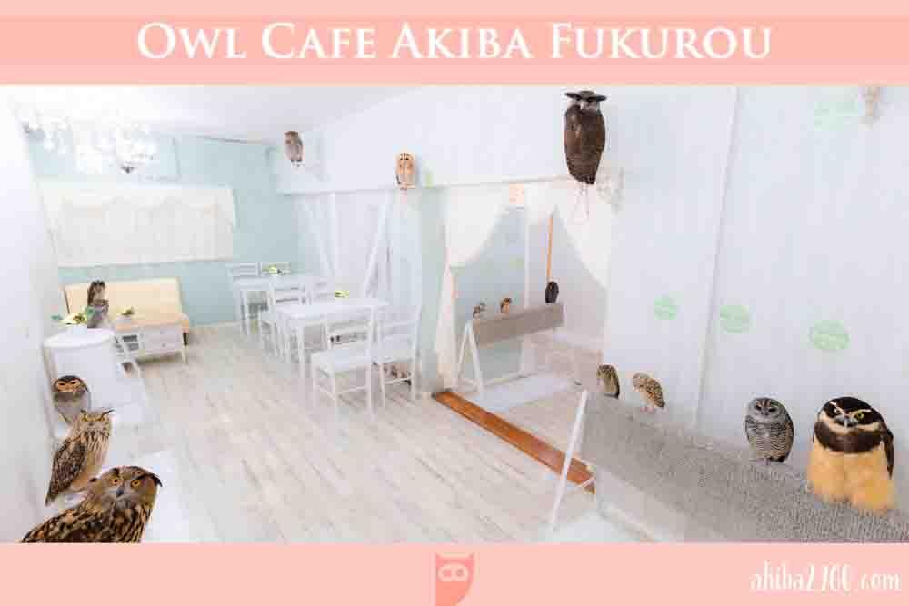 フクロウカフェ東京