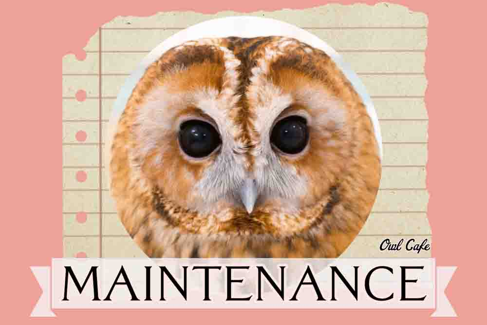 フクロウのメンテナンス料金・東京|爪切り・嘴カット