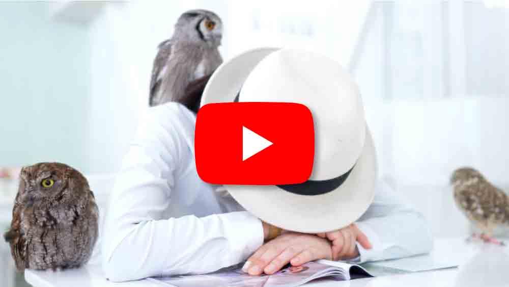 フクロウ3羽と寝る女性