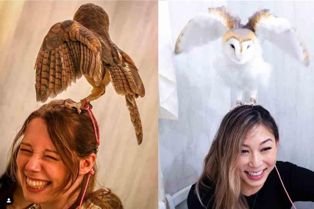 メンフクロウが頭の上にいる写真