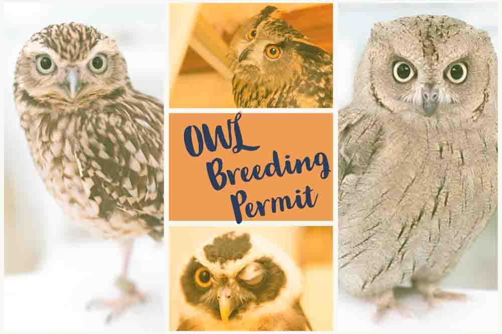 フクロウの飼育許可・資格