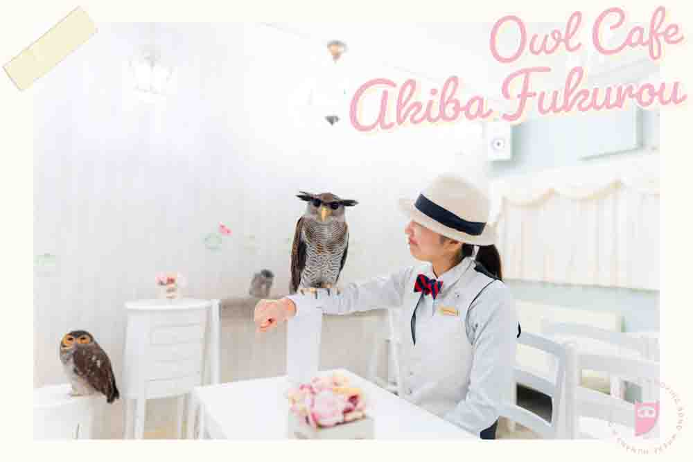 owl cafe japanフクロウカフェ 東京