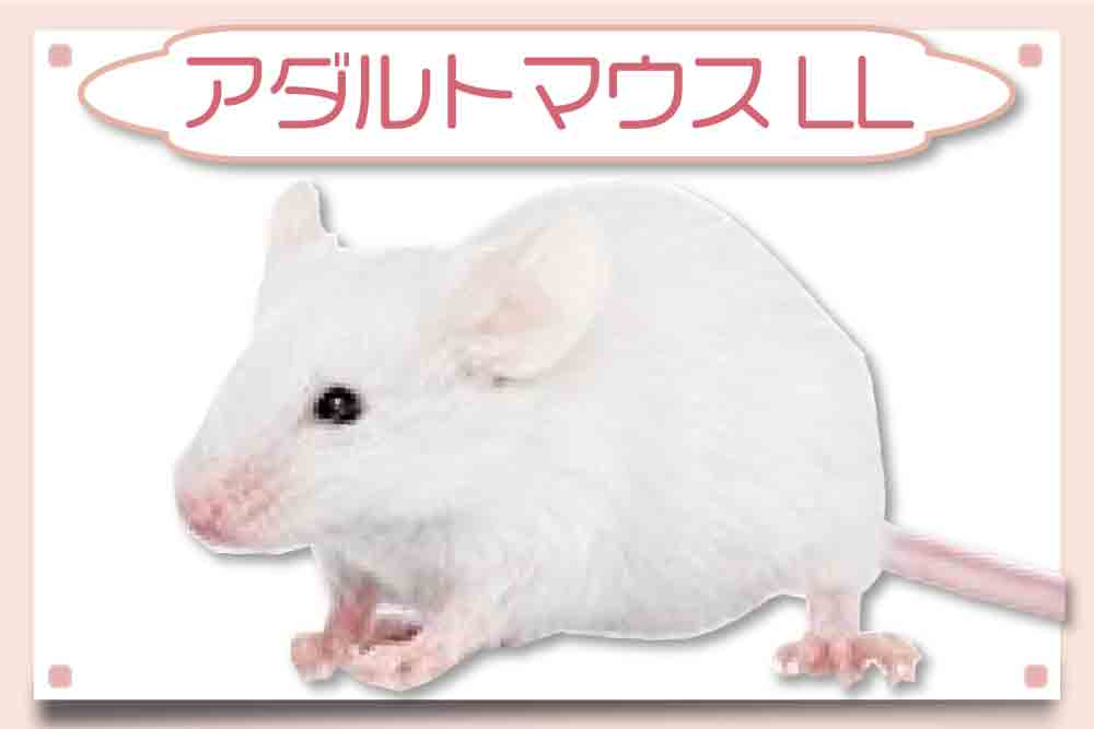 アダルトマウスLL|冷凍マウス