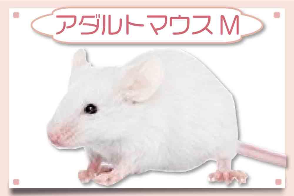 アダルトマウスM|冷凍マウス