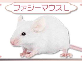 ファジーマウスL|冷凍マウス