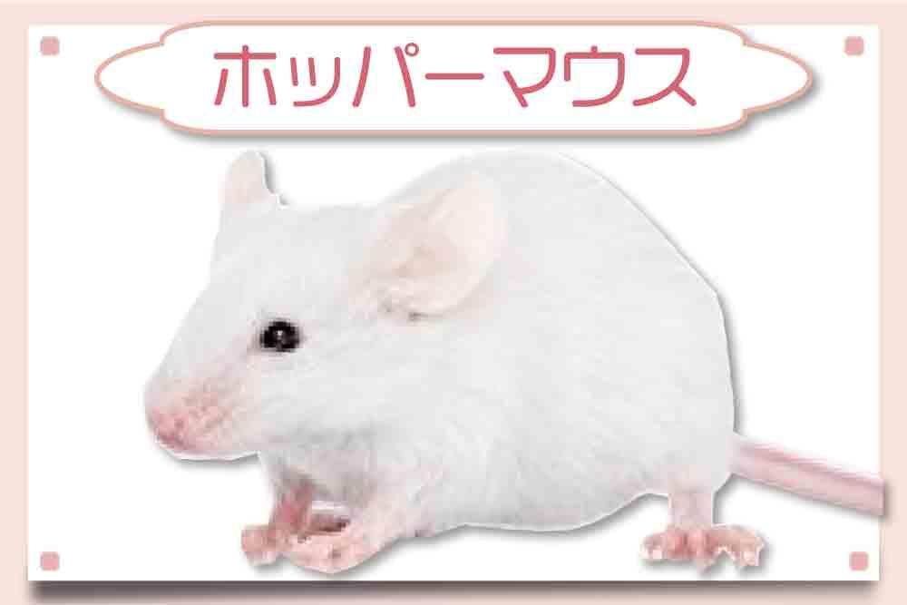 ホッパーマウス|冷凍マウス
