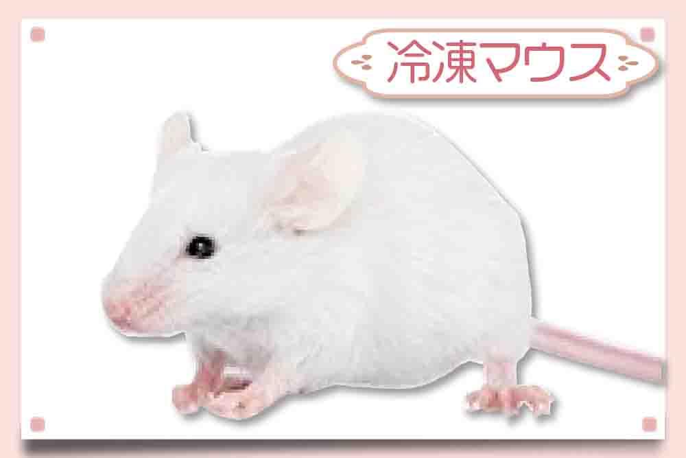 冷凍マウス