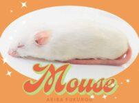 冷凍マウス解凍