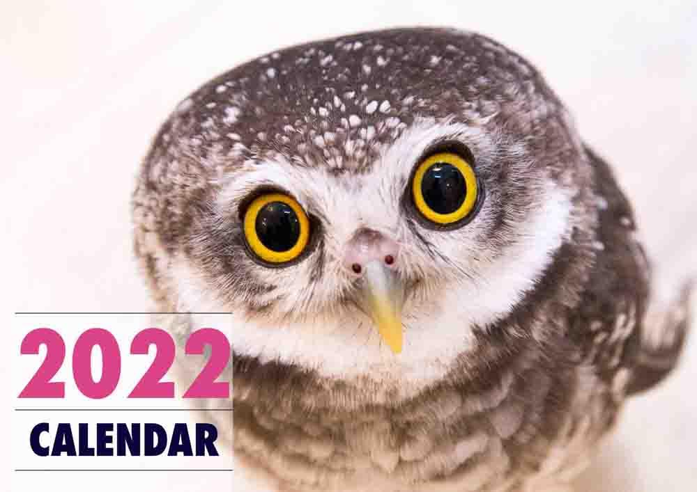 ふくろう カレンダー 2022