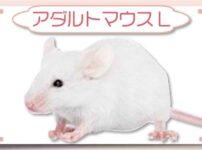 アダルトマウスL|冷凍マウス