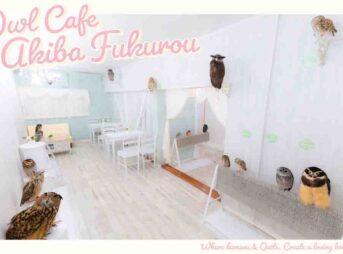 owlcafe-tokyo-AkibaFukurou