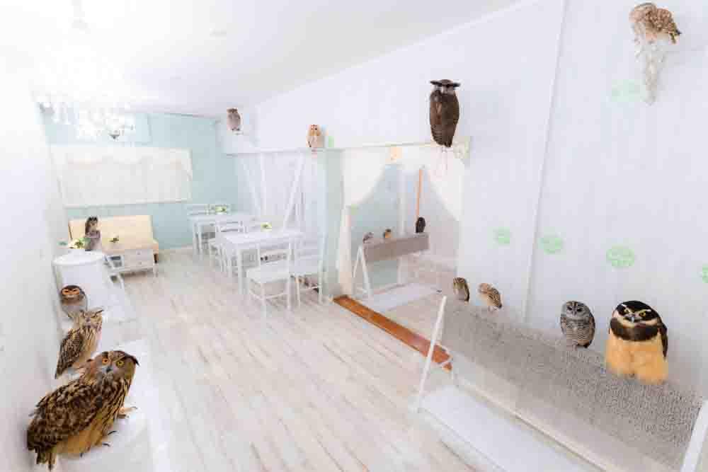 owl cafe tokyo japan