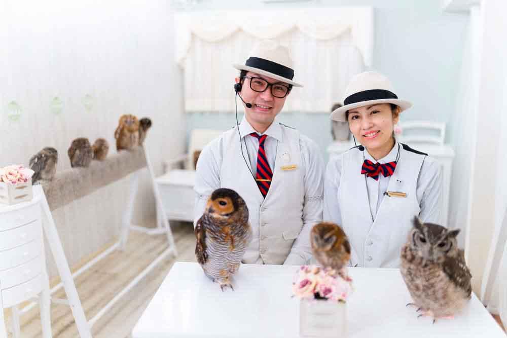 owlcafe-japan