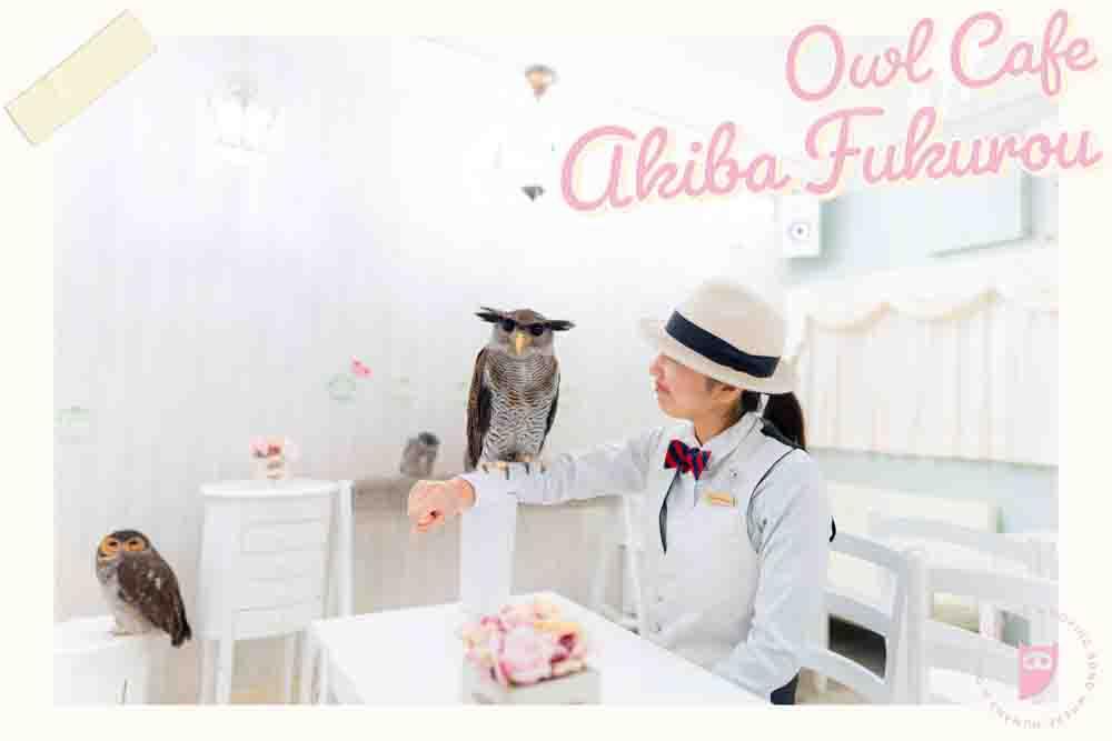 owlcafe-tokyo